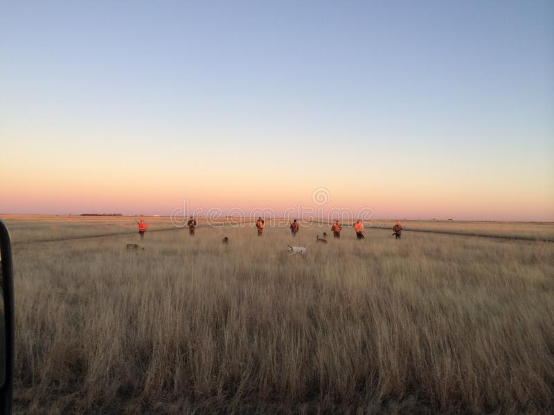 野鸡狩猎 免版税图库摄影