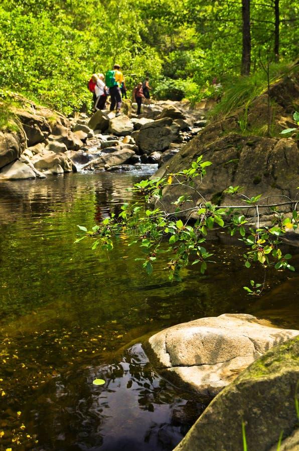 野黑樱桃分支和岩石在水中在黑河狼吞虎咽 免版税库存图片