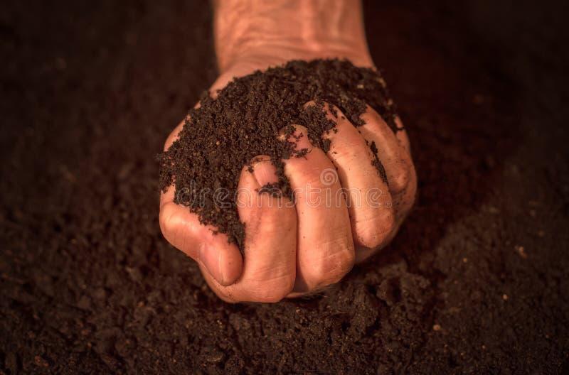 质量土壤在男性花匠手上 免版税库存照片