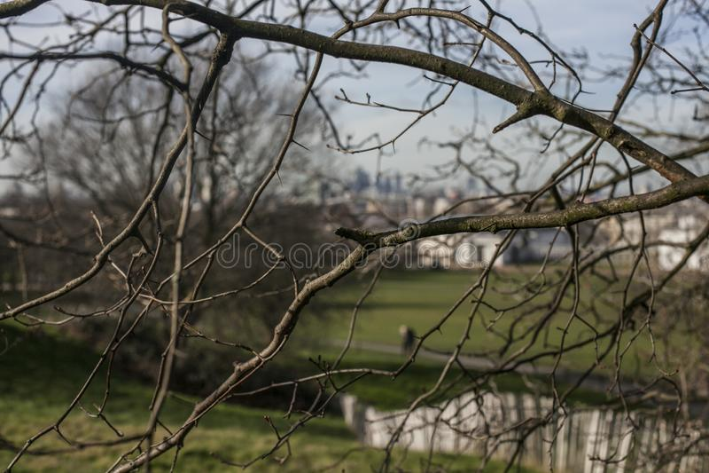 金丝雀码头看法从格林威治公园的;赤裸分支 免版税库存照片