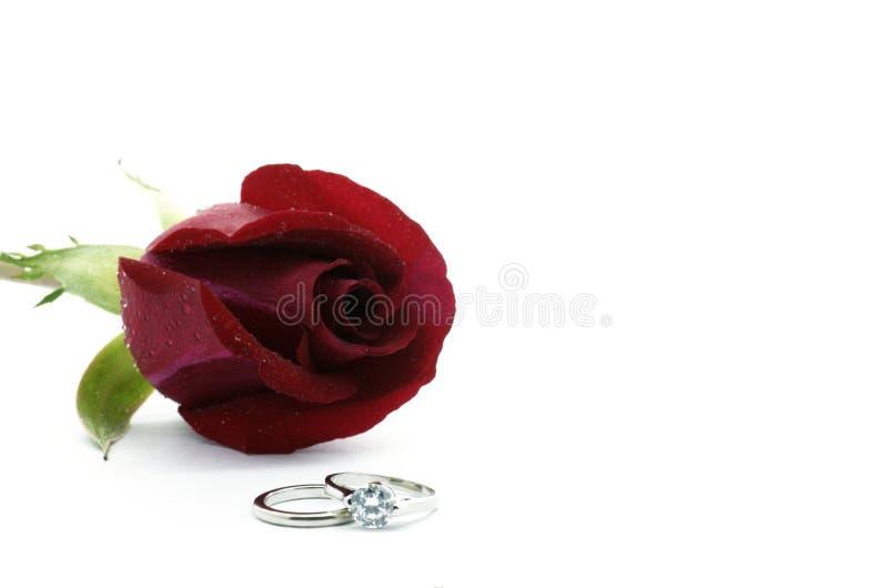 金刚石红色环形玫瑰白色 免版税库存照片