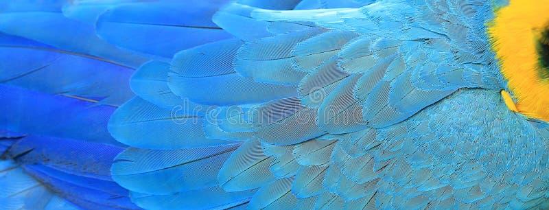 金刚鹦鹉用羽毛装饰背景 库存图片
