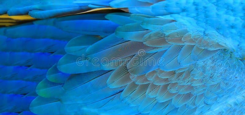 金刚鹦鹉用羽毛装饰背景 免版税库存照片
