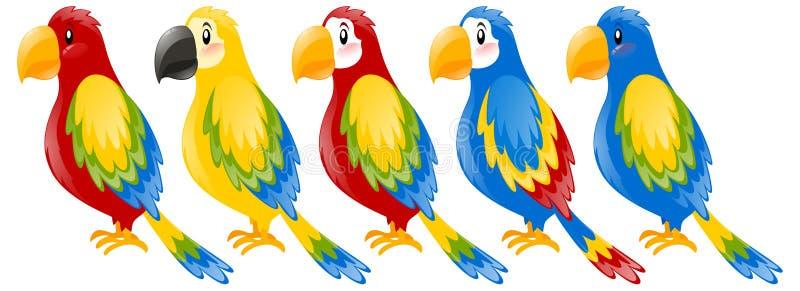 金刚鹦鹉鹦鹉用不同的颜色 皇族释放例证
