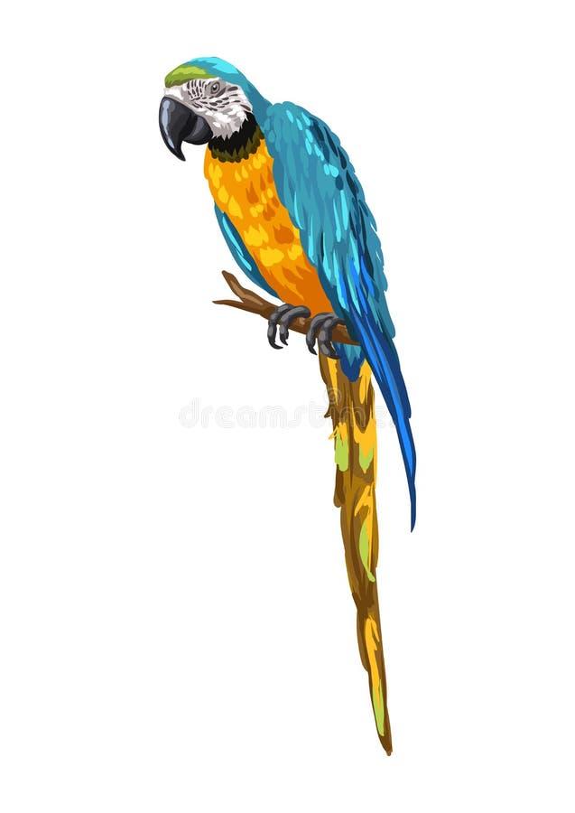 金刚鹦鹉鹦鹉的例证 库存例证