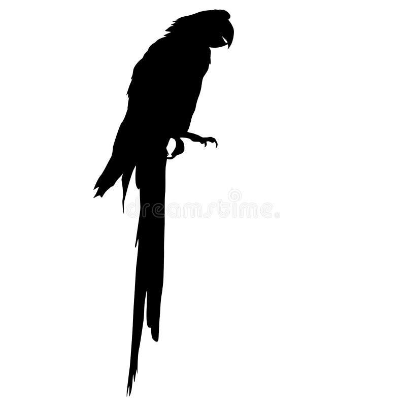 金刚鹦鹉 也corel凹道例证向量 向量例证