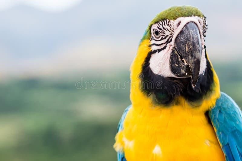 金刚鹦鹉 库存图片