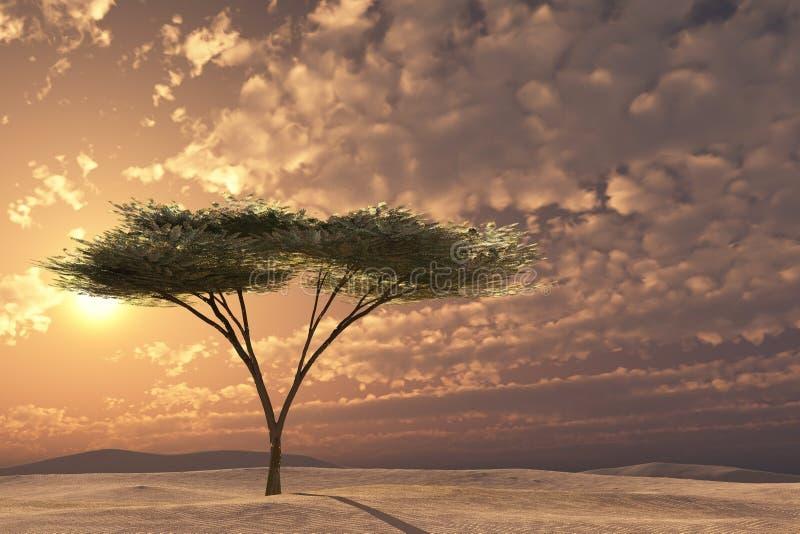 金合欢日落结构树 免版税库存图片