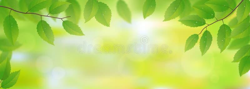 金合欢背景绿色叶子 库存例证