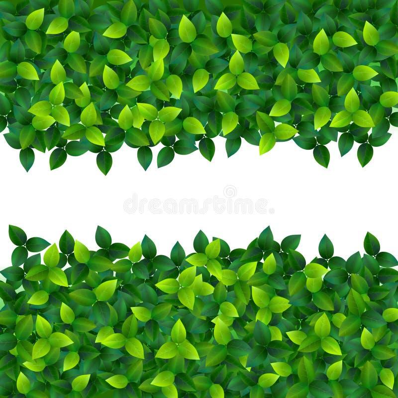 金合欢背景绿色叶子 皇族释放例证