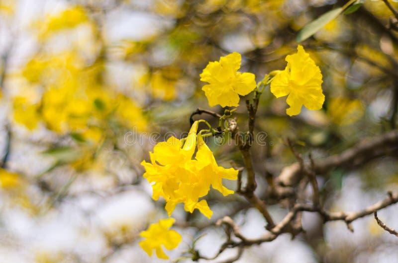 金子树  库存图片