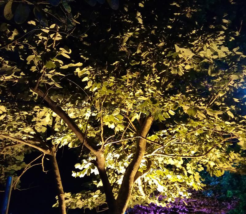 金子颜色树 免版税库存照片