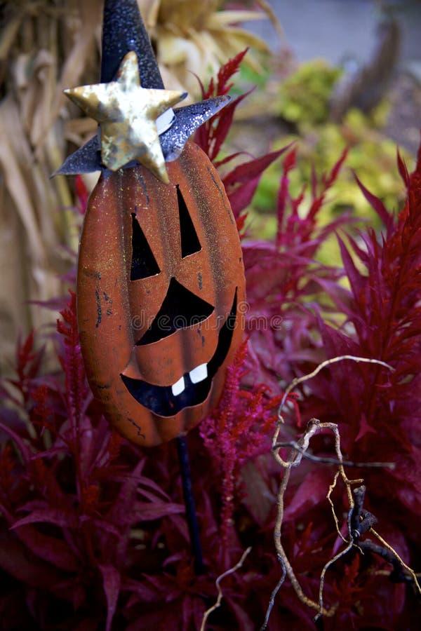 金属化南瓜与大愚蠢的白色牙和Witch& x27的围场装饰; s帽子在紫色植物中潜伏 免版税库存图片