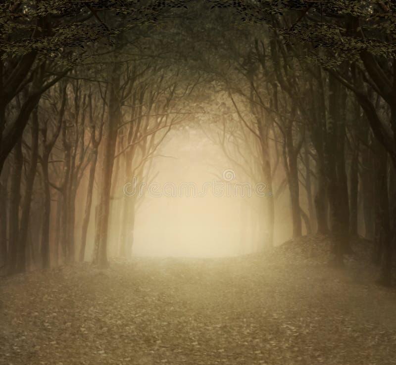 金有雾的森林 皇族释放例证