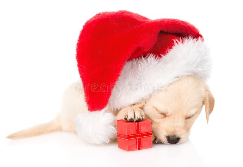 金毛猎犬与礼物和圣诞老人帽子的小狗 查出 库存图片