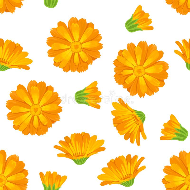 金盏草无缝的样式 在动画片平的样式的明亮的橙色花 皇族释放例证