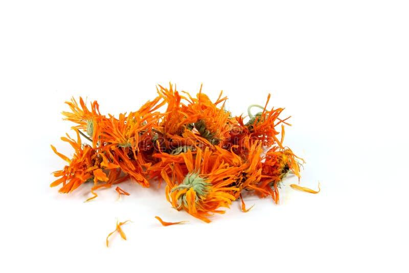 金盏草officinalis花,万寿菊,干 库存照片