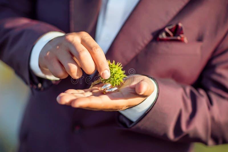 金结婚戒指用多刺的绿色栗子在新娘的手上一套紫色衣服的 免版税库存图片