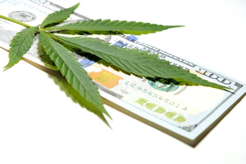 金钱和大麻 大麻叶子在一百元钞票说谎 浅深度的域 毒品交易或l的概念 库存照片
