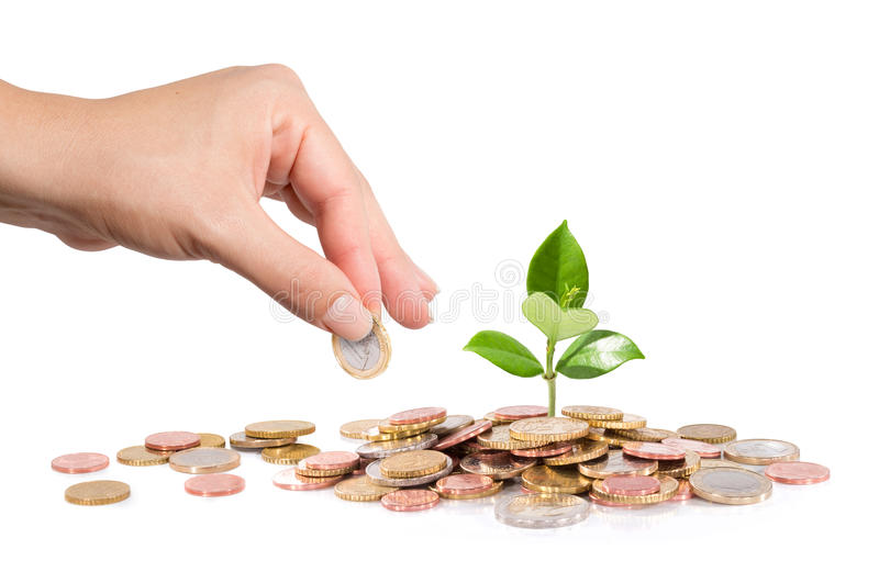 金钱和植物用手提供经费给新的事务 免版税库存图片