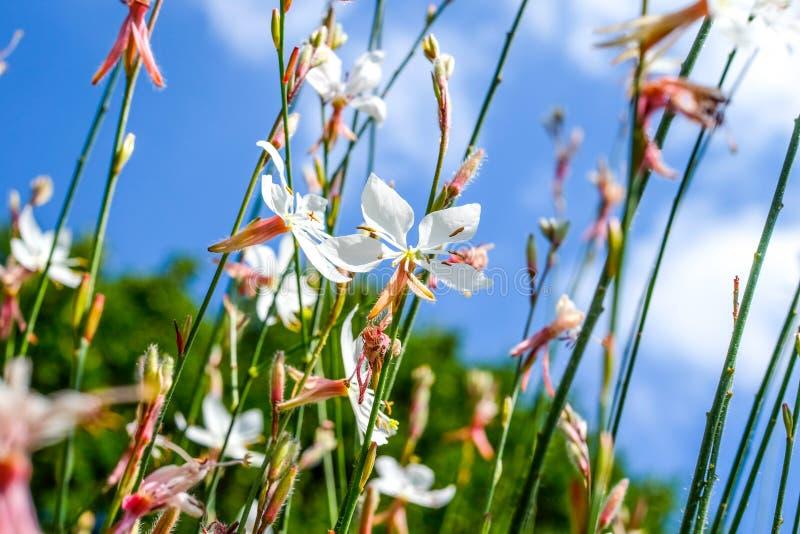 金银细丝工的花茎和开花 免版税库存图片