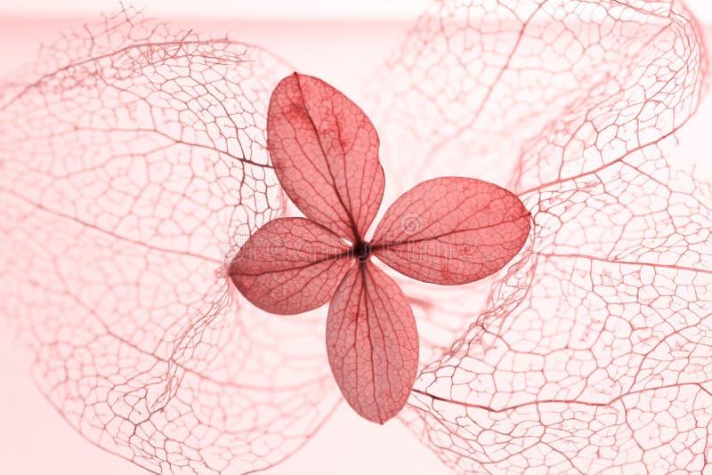 金银细丝工的空泡骨骼和干八仙花属开花 库存图片