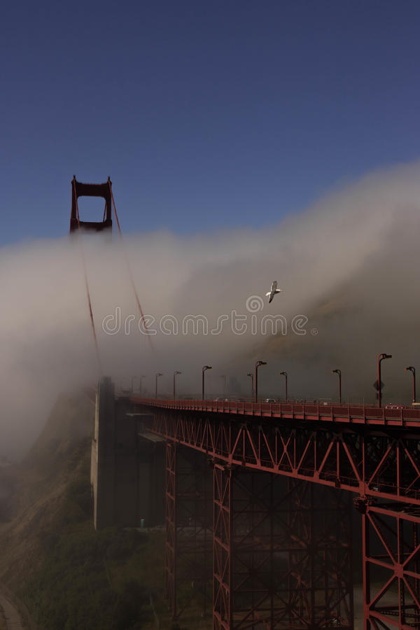 金门大桥和海鸥 免版税库存图片