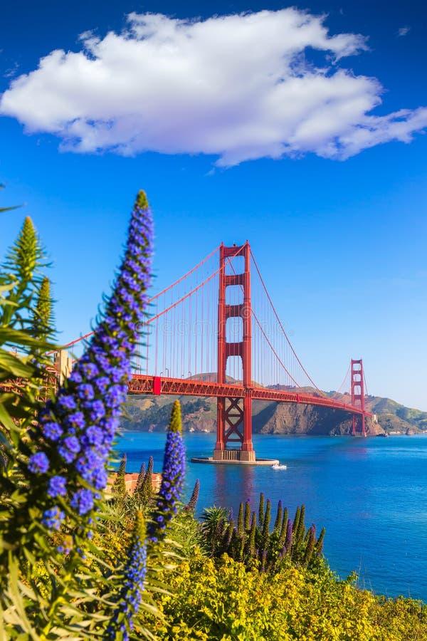 金门大桥旧金山紫色开花加利福尼亚 免版税图库摄影