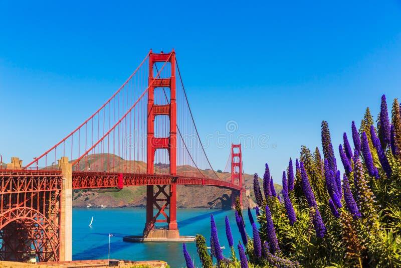 金门大桥旧金山紫色开花加利福尼亚 免版税库存照片