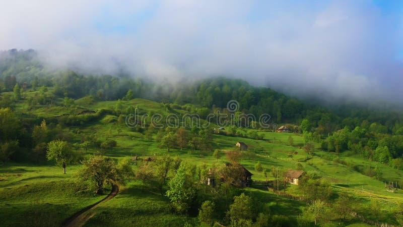 金马仑高原的马来西亚茶园 日出在与雾的清早 图库摄影