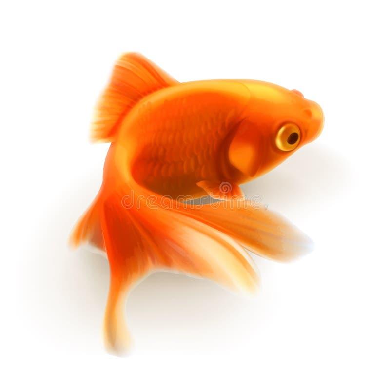 金鱼传染媒介例证 库存例证