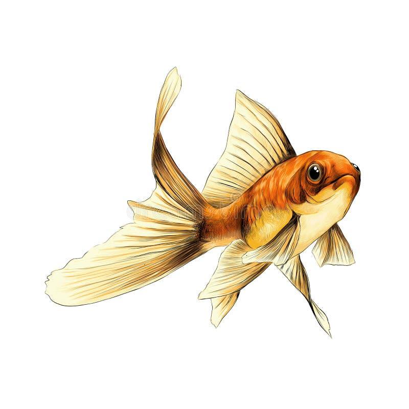 - Croquis poisson ...