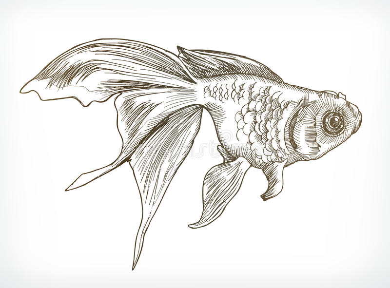 金鱼剪影 向量例证