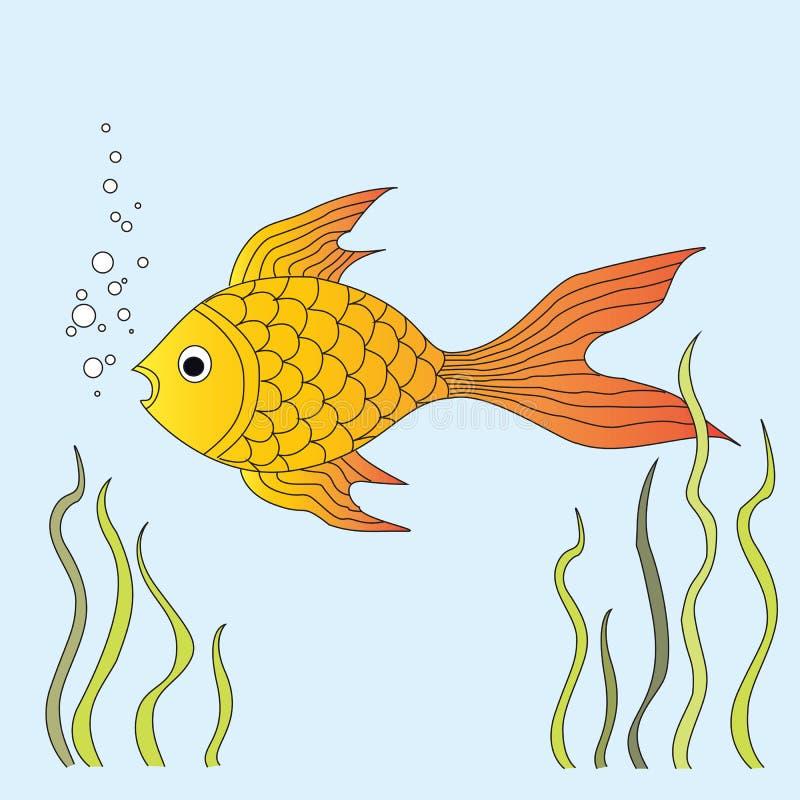 金鱼游泳在水族馆的水中 在它附近的海藻 r 皇族释放例证