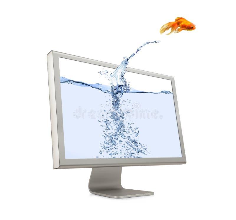 金鱼跳出的屏幕 免版税图库摄影