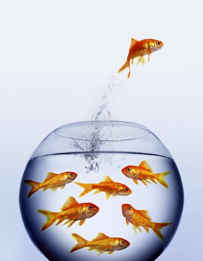 金鱼跳出的水 图库摄影