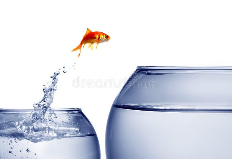 金鱼跳出的水 免版税库存图片