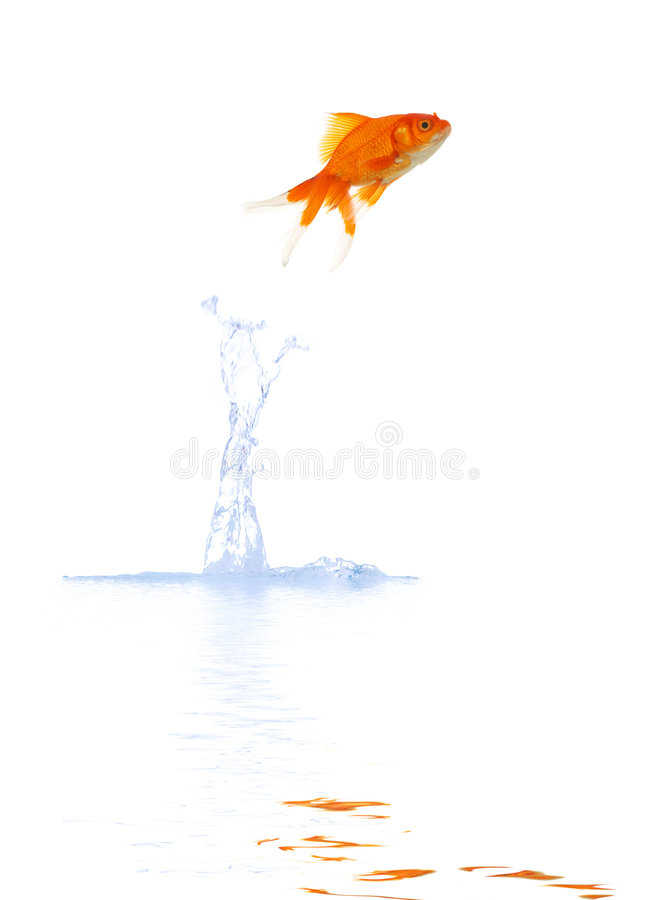 金鱼跳 免版税库存照片