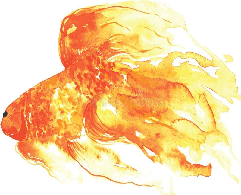 金鱼,手画水彩 皇族释放例证