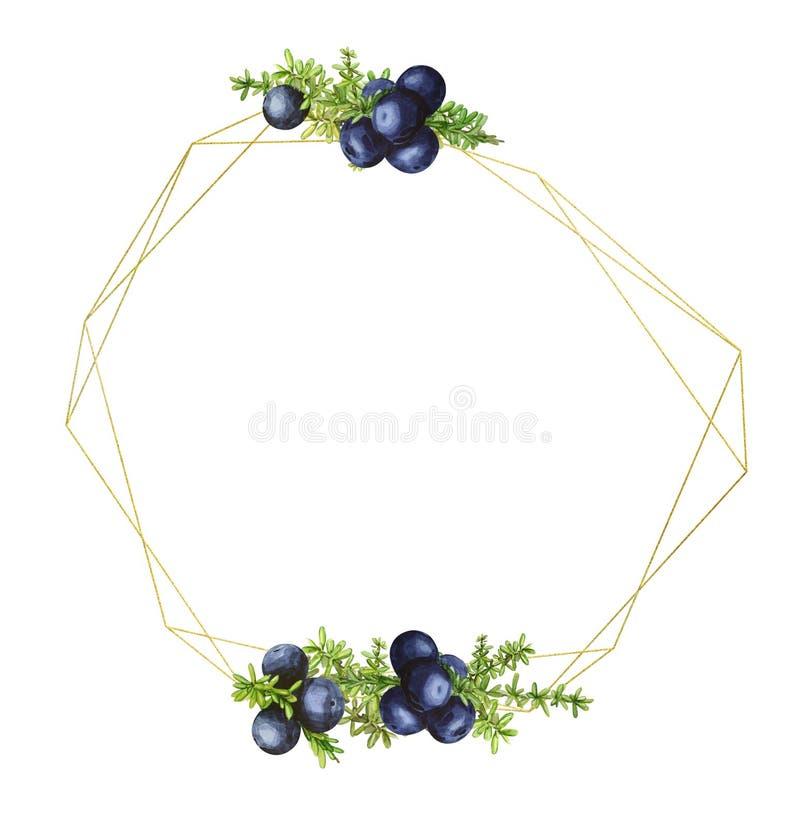 金黄几何框架用岩高兰的黑森林北莓果,绘在水彩 婚姻的邀请的理想, 向量例证