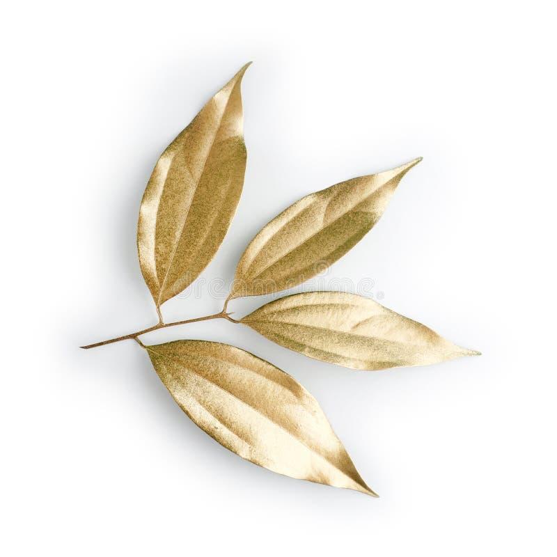 金黄叶子设计元素 邀请的装饰元素,喜帖,情人节,贺卡 查出在白色 免版税库存图片