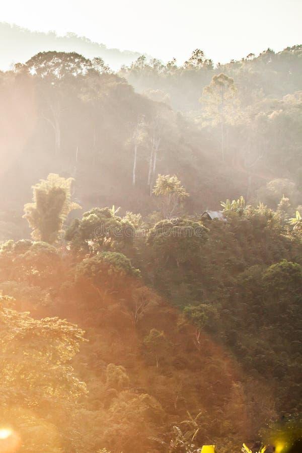 金黄太阳设置在山和一点家附近发光下来在热带森林咖啡有机农场 远程位置在 免版税库存图片