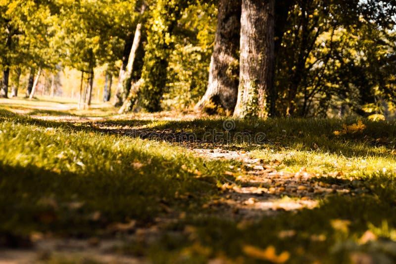 金黄小时和不可思议的步行 免版税库存照片
