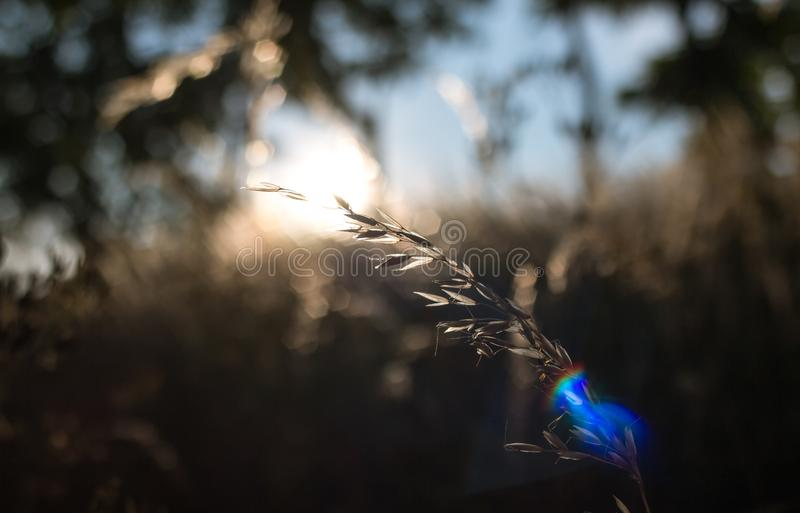 金黄小时和干草草 库存照片