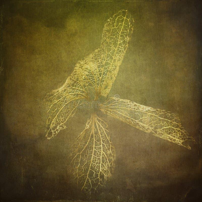 金黄抽象花蝴蝶 库存图片