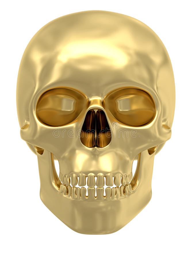 金黄查出的头骨白色 库存例证