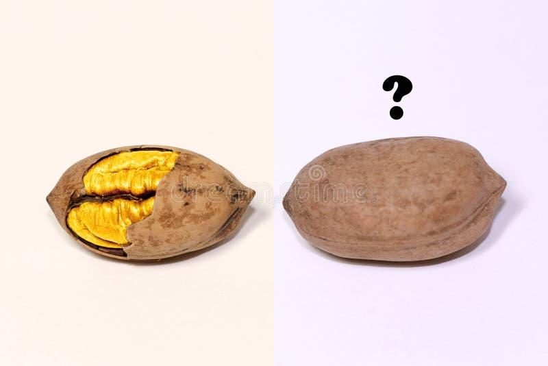 金黄核桃 库存图片