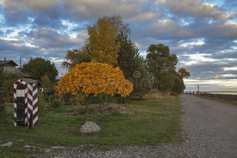 金黄槭树在蓝天背景离开 免版税库存图片