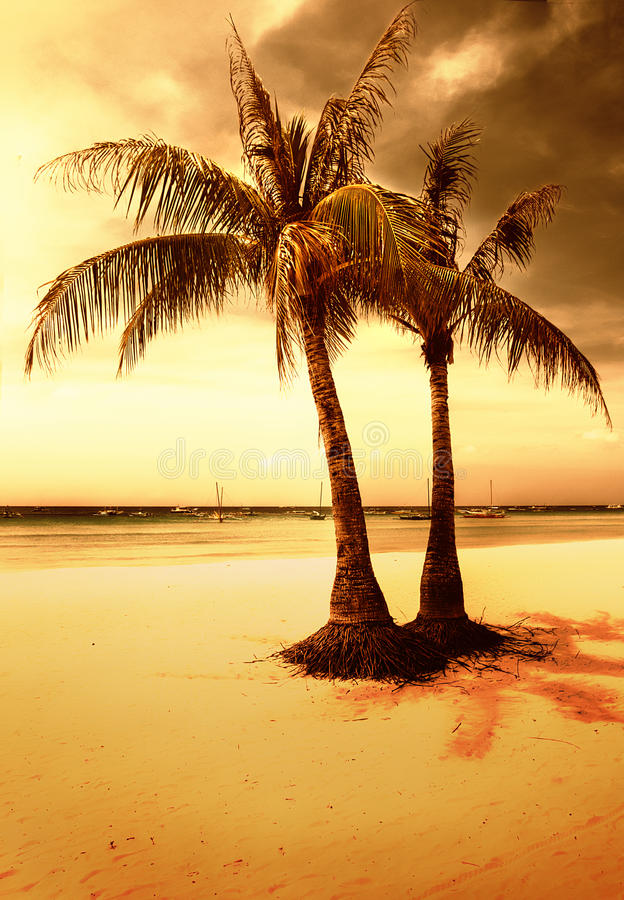 金黄的海滩 库存图片