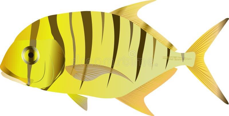 金黄的gnathanodon Trevally 图库摄影